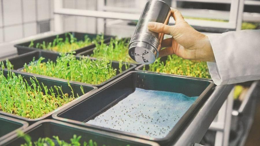Nuevo método de cultivo ofrece resultados tres veces más rápido con menos consumo de agua