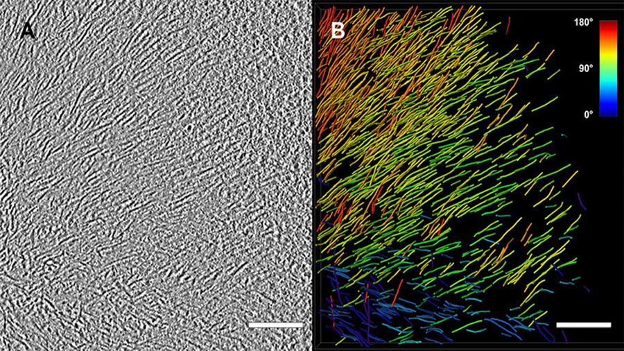 Así son los retratos de moléculas congeladas que han ganado el Nobel