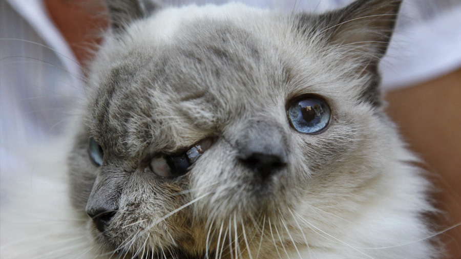 ¿Por qué algunos animales nacen con dos caras?