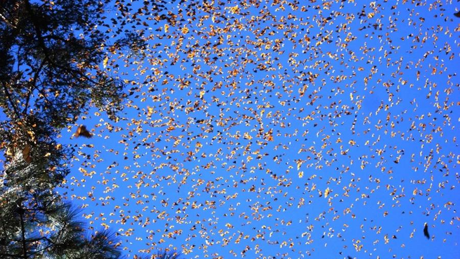 Un radar meteorológico en Estados Unidos se iluminó con una gran nube de mariposas