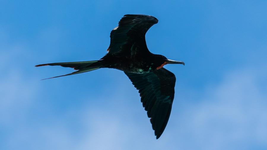 ¿Cómo logran las aves dormir en pleno vuelo sin caerse?