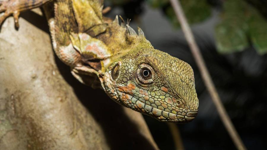 Un estudio revela el escondite secreto de los reptiles