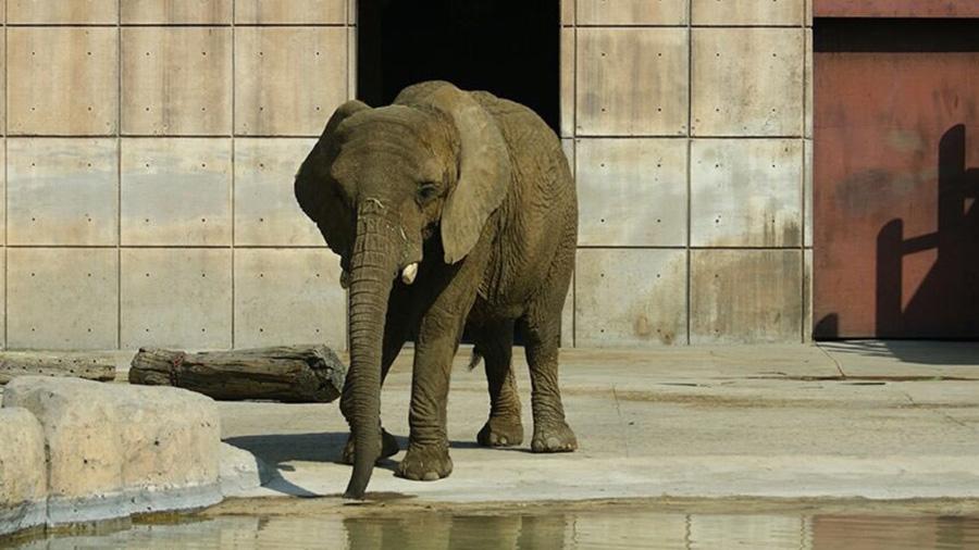 """Graban reacción de elefanta """"Ely"""" durante sismo del 19-S"""