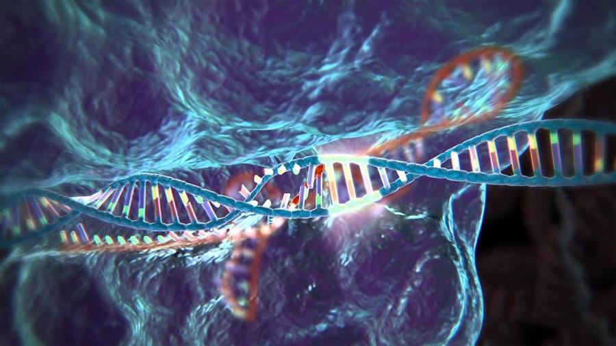 Conocimientos pioneros sobre el funcionamiento de los genes