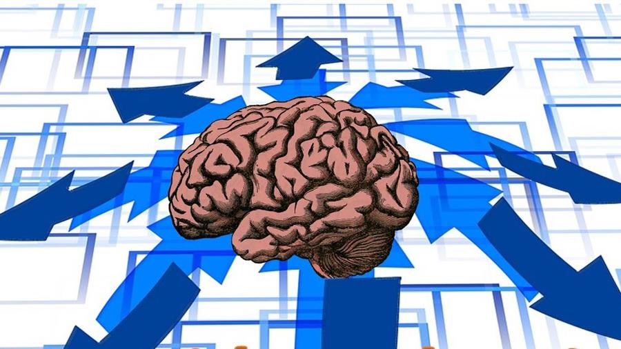 Descubren mecanismo cerebral que permite la atención selectiva