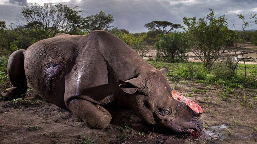 La foto que muestra la dura realidad de la caza ilegal