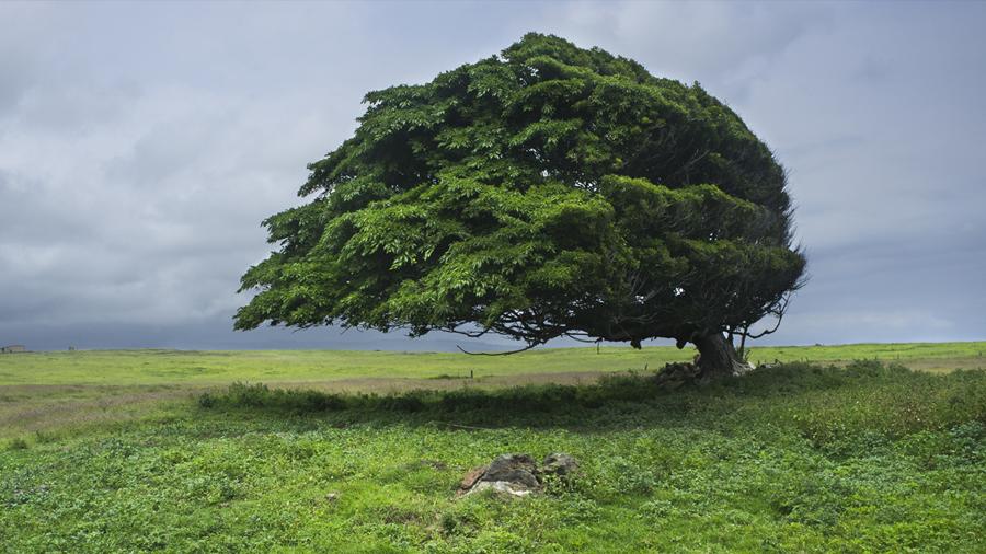 Descubren cómo la luz y el viento modelan a los árboles