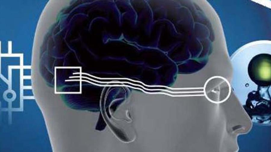 Un estudio investiga un conflicto entre el desarrollo de los ojos y de la corteza cerebral