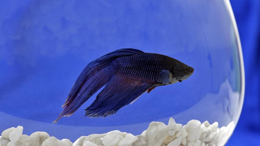 La depresión en los peces podría ayudar a las personas