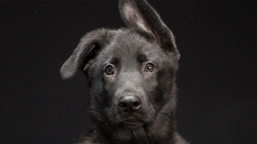 Los perros usan expresiones faciales para comunicarse con los humanos
