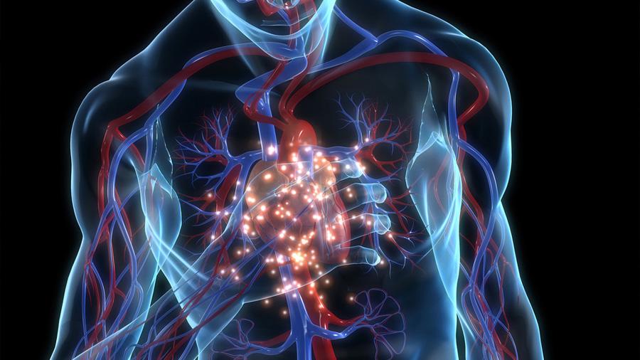 El riesgo de infarto y diabetes se mide en la cintura, alerta experto