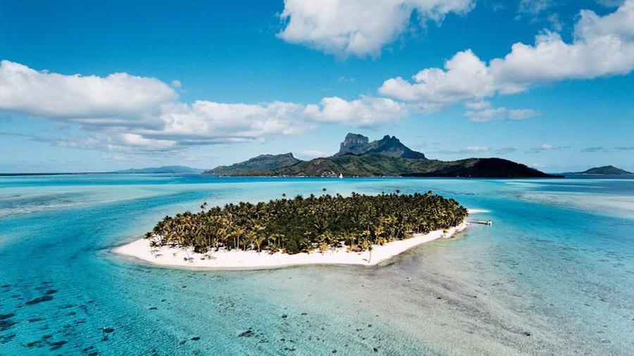 La mitad de los animales que está en peligro de extinción en el mundo vive en islas