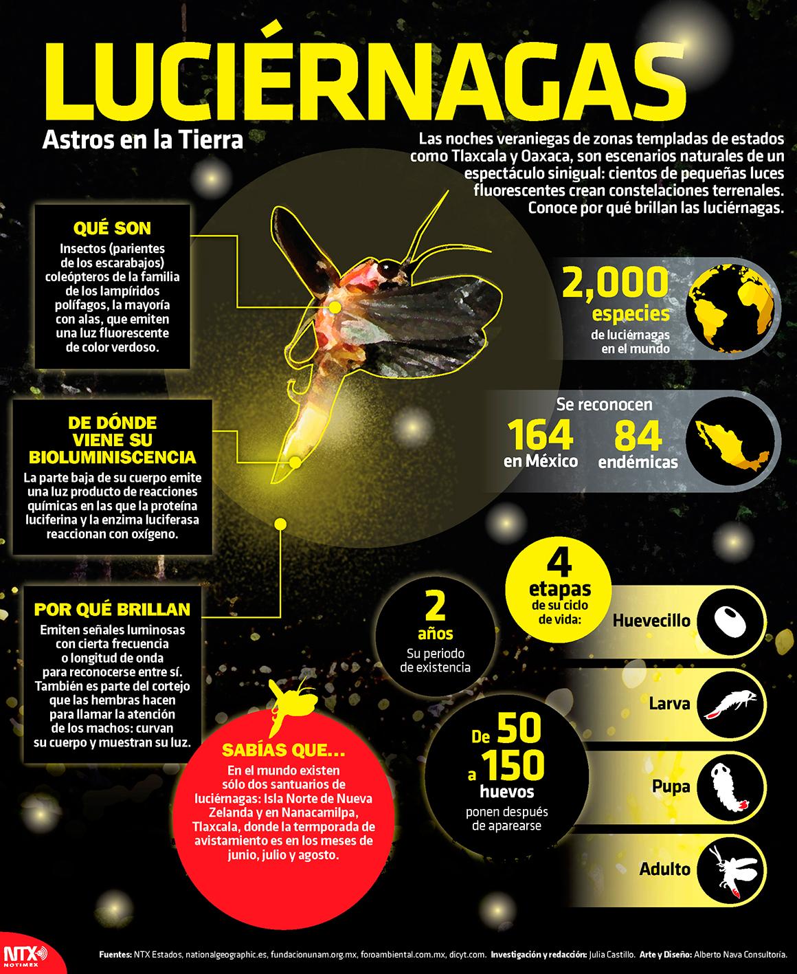 Luciérnagas, Astros en la Tierra