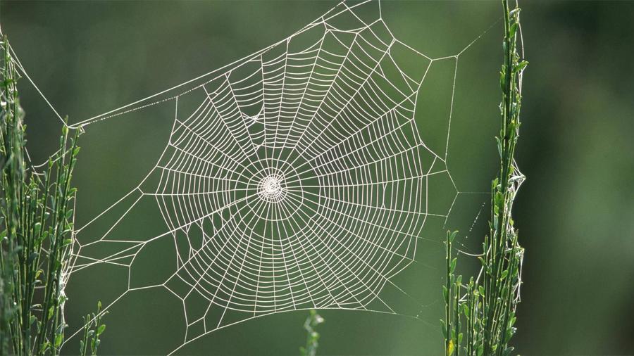 Seda de araña, empleada en micrófonos más sensibles para aparatos auditivos