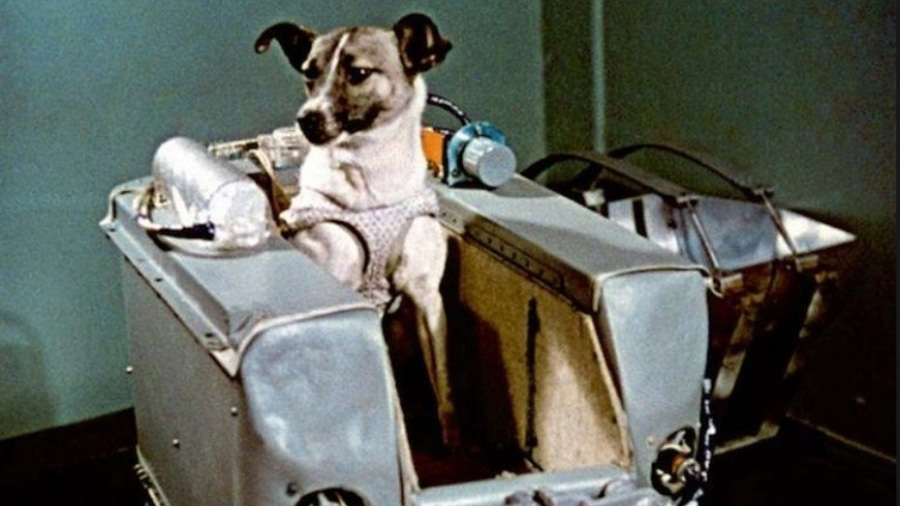La pionera en el espacio: se cumplen 60 años del viaje de la perrita Laika