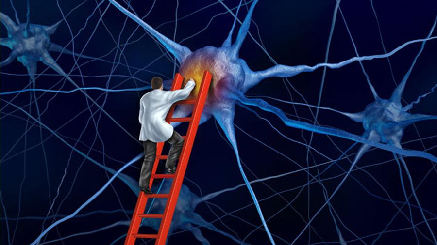 Miden las sinapsis que conectan el cerebro con los sentidos