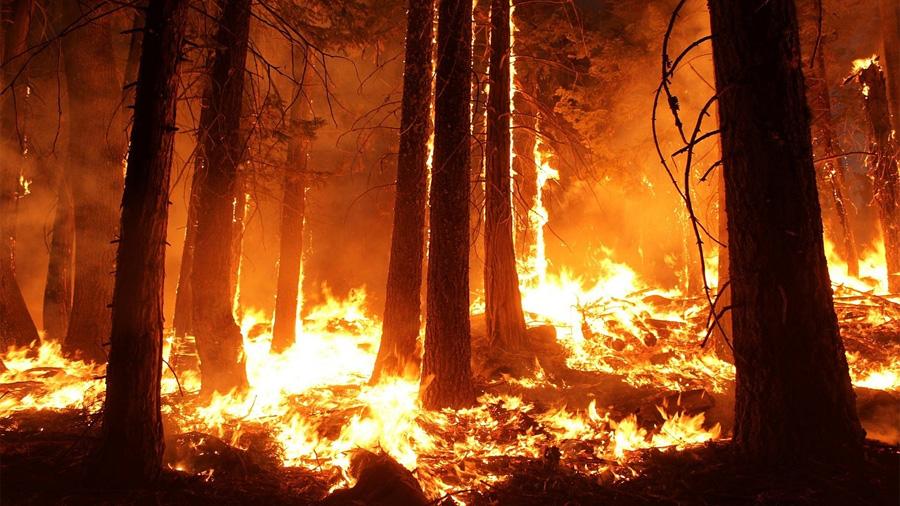 Los incendios forestales no son sólo una catástrofe ambiental