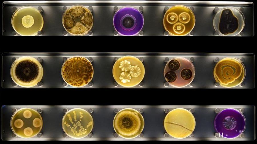 Crean la primera base de datos global de microbios con más de 27.000 muestras