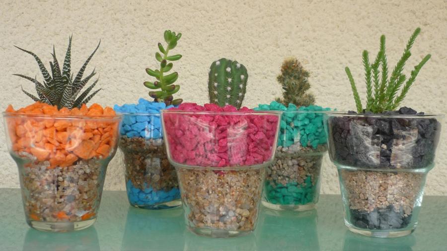 Cinco plantas que tiene en casa la gente y que nunca se acuerda de regarlas