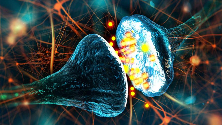 Se describe un nuevo mecanismo regulador de la memoria