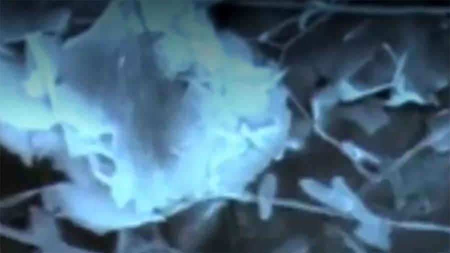 Descubren desconocida forma de vida que brilla en las profundas cuevas del Gran Cañon