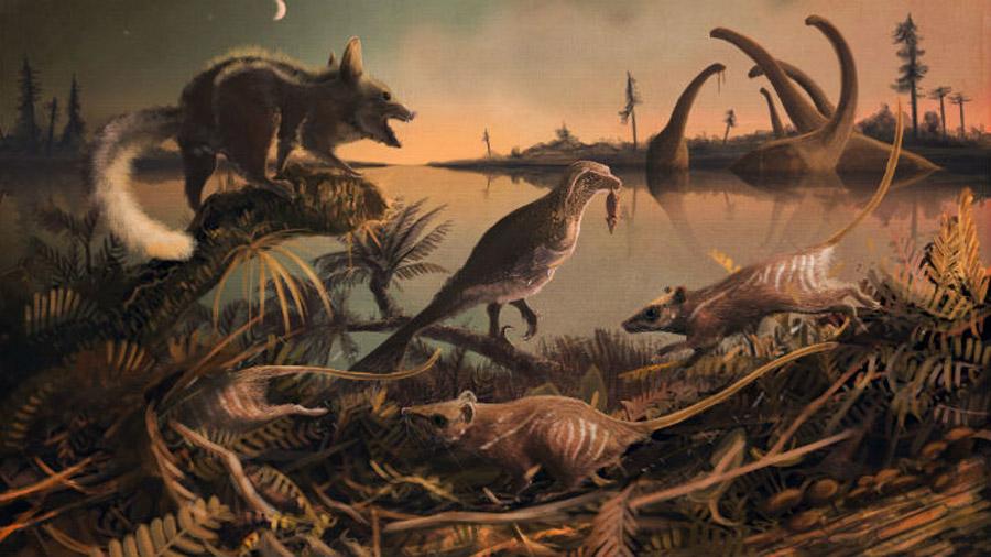 Encuentran restos en excelente estado del ancestro más antiguo del hombre
