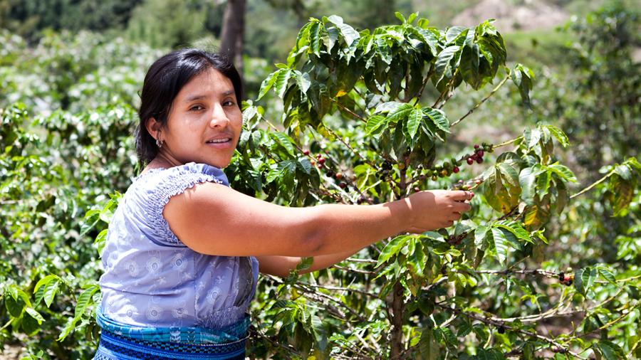 Senado aprueba fortalecer en la Ley a pequeños productores agrícolas