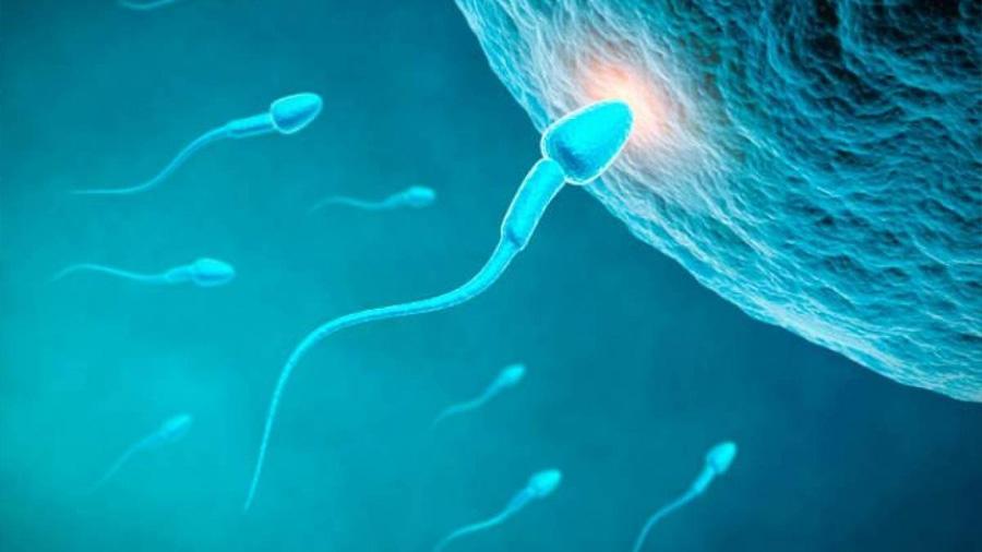 Equipo de científicos descifra los acordes de los espermatozoides al navegar