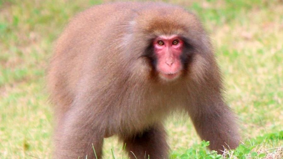 Replican en macacos la cura del VIH del paciente Berlín