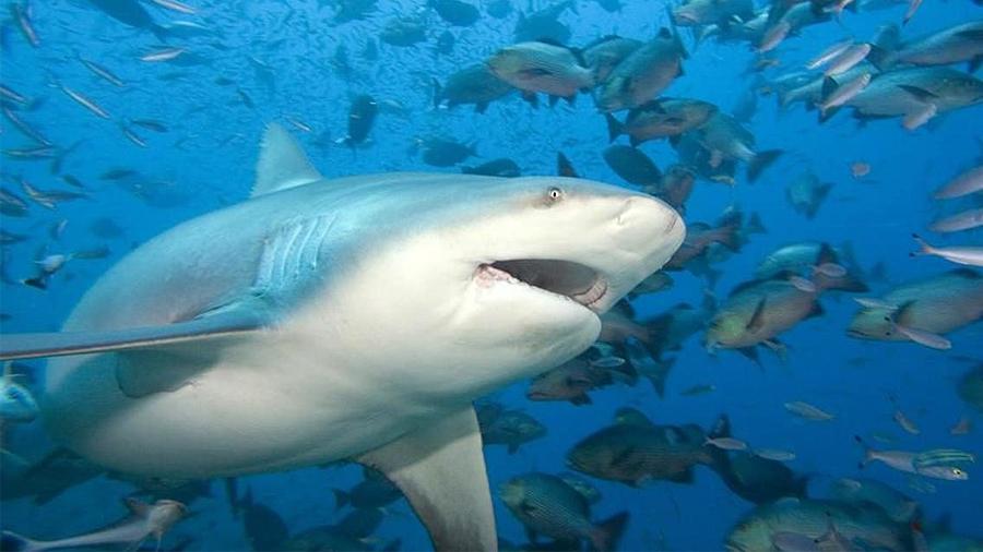 Último descubrimiento de la ciencia: Tiburones que viven hasta 272 años