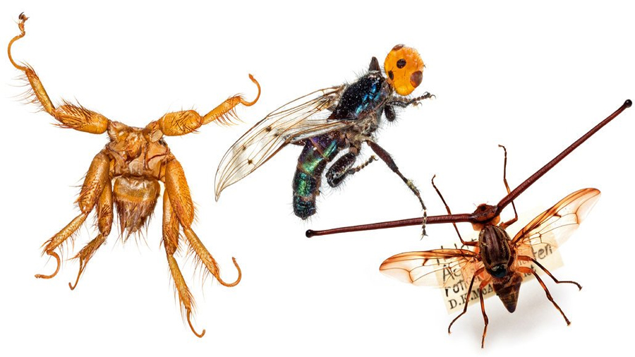 Las moscas hacen mucho más que molestarnos