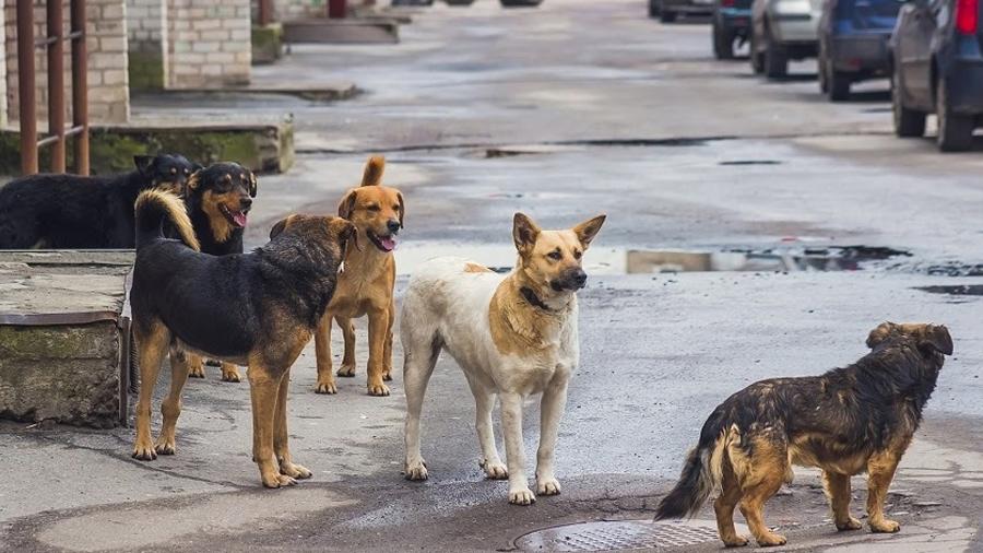 Investigadores mexicanos crean comida anticonceptiva para perritos callejeros