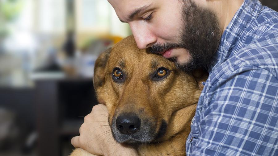 Tener un perro reduce el riesgo de morir por cualquier causa