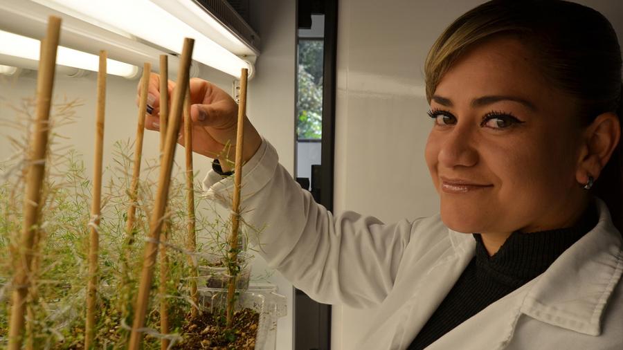 Desarrollan científicos mexicanos exitosos fertilizantes a base de fósforo empleando nanotecnología