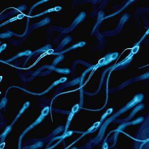 Arroja estudio que la contaminación altera el tamaño y calidad de espermatozoides