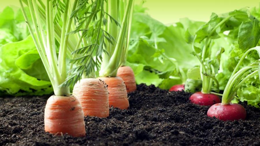 Si quieres agricultura orgánica, come menos carne y no tires comida