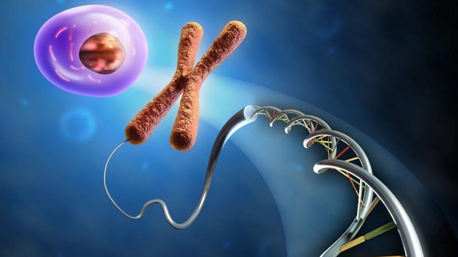 Descubren que el ADN puede formar nudos muy complejos dentro del núcleo celular
