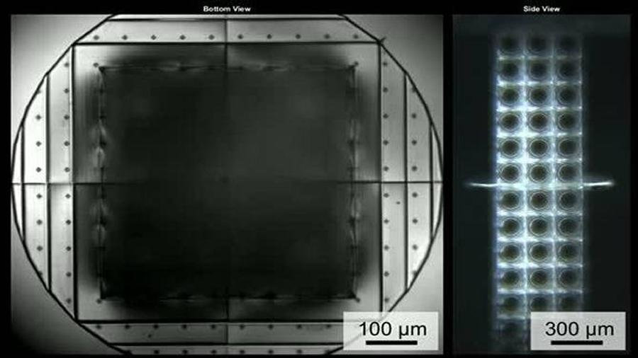 Grabadora microscópica, hecha a base de bacterias, para registrar datos bioquímicos
