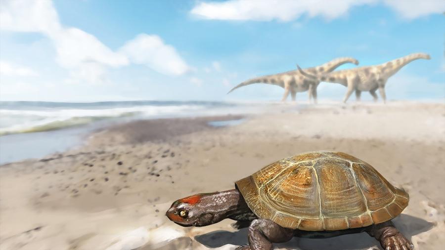 El increíble viaje de la primera tortuga africana que llegó a Europa