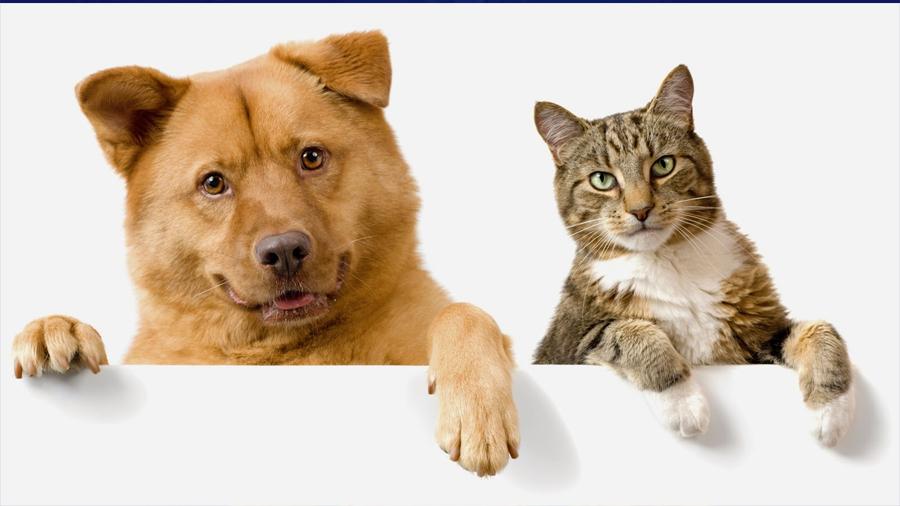 Los perros, más inteligentes que los gatos, porque tienen más neuronas