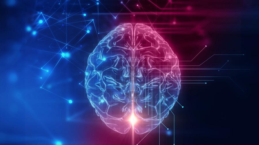 Científicos desvelan la química de la memoria
