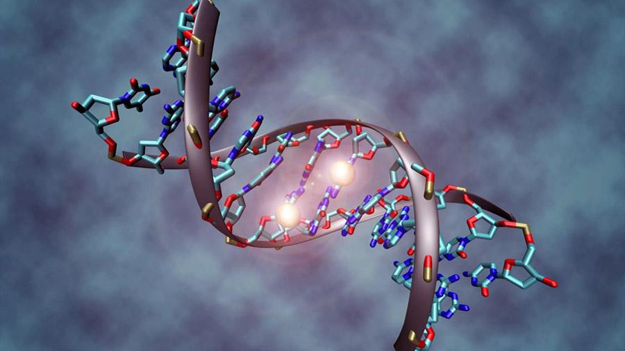 Desvelan el papel de un mecanismo de reparación del ADN