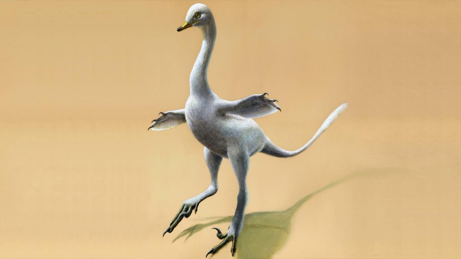 Un dinosaurio parecido a un pato con cuello de cisne y aletas de pingüino