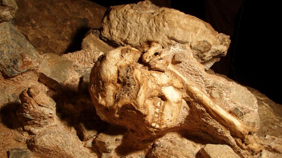 Conoce a 'Little Foot', el fósil más completo de Austrolopithecus