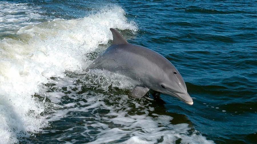 La alimentación humana no sostenible amenaza cultivos silvestres y delfines
