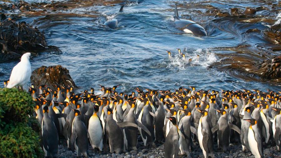 Las mejores fotografías científicas del año, según la Royal Society