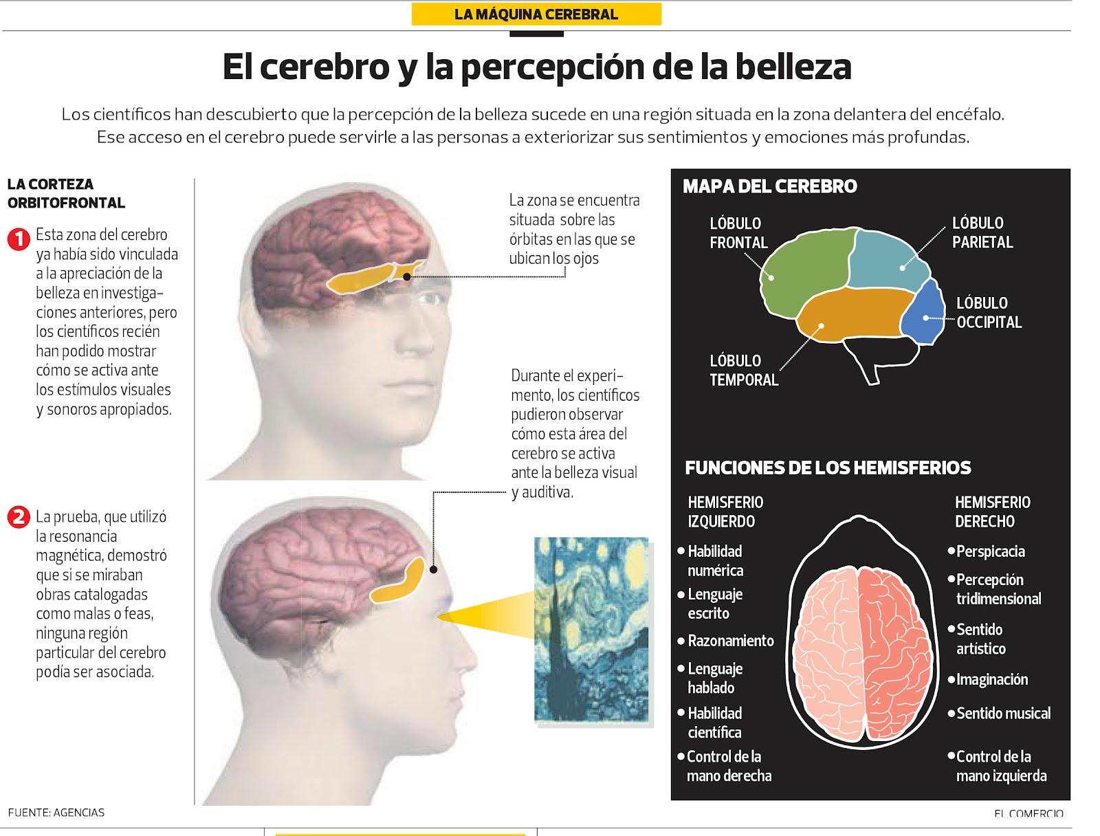 El cerebro y la percepción de la belleza