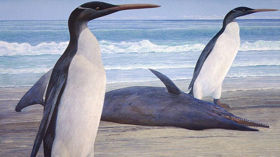 Científicos descubrieron pingüino prehistórico del porte de un humano