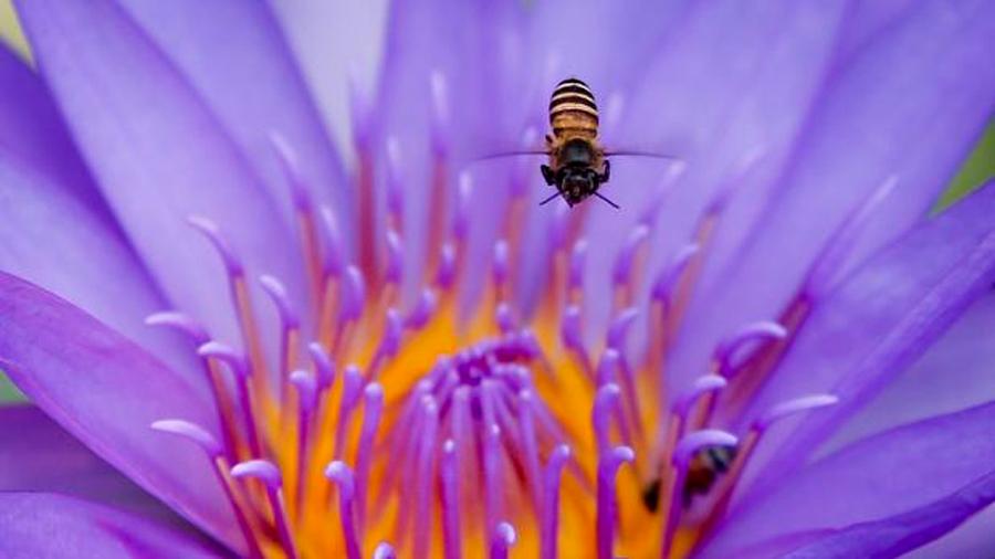 El enorme y olvidado valor de los insectos