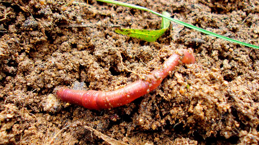 Macrofauna del suelo optimiza la fertilidad de la tierra y evita uso de agroquímicos